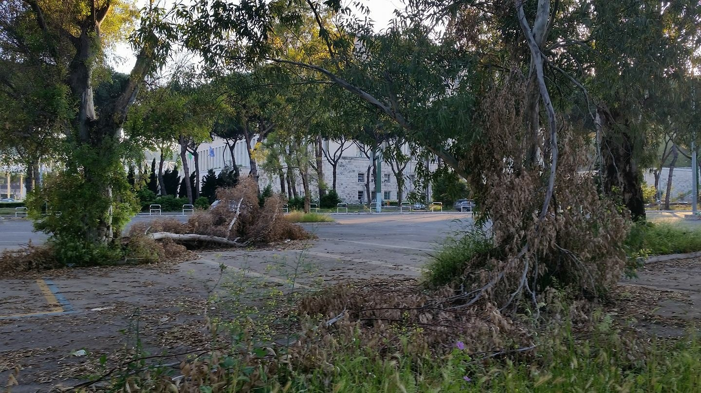 Italia Nostra Lazio lancia la Lista Verde a difesa degli alberi