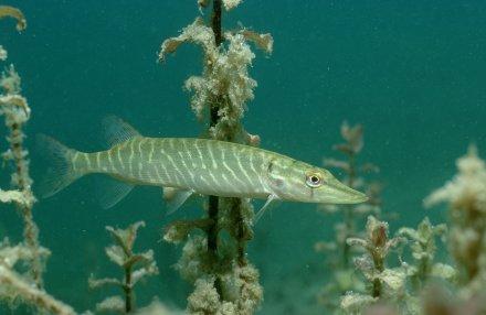 Minnucci: dalla Regione via libera alla pesca sportiva nei laghi di Bracciano-Martignano. Sperimentazione per un anno