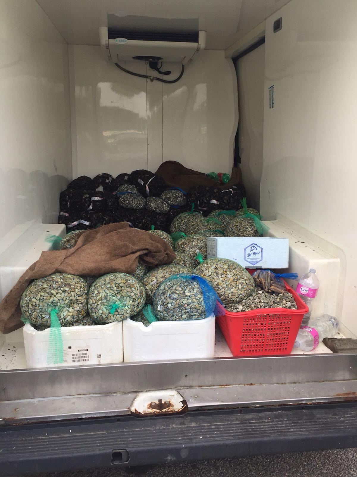Guardia Costiera sequestra a furgone proveniente dalla Campania oltre 8 quintali di molluschi privi di tracciabilità