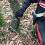 Riserva Monterano: carabinieri  denunciano bracconiere canalese