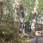 Bracciano – Tagli alberi effettuati senza autorizzazione paesaggistica