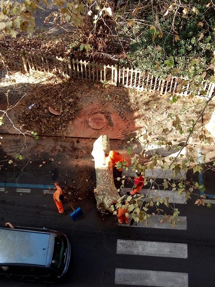Taglio degli alberi a Bracciano: 10 domande all'esperto Gian Piero Cantiani