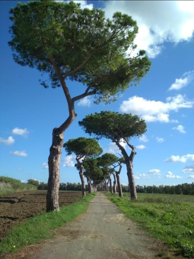 Italia Nostra, Fai e Wwf: percorso ciclabile nella Riserva Litorale? Cinque buone ragioni per privilegiare il tracciato esistente