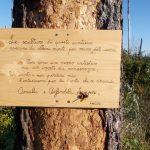 Lago di Martignano – L'artista Angel realizza il percorso di sensibilizzazione Deus Sive Natura scolpendo i tronchi rimasti della pineta andata in fiamme