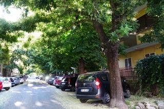 Italia Nostra Lazio: Abbattimenti indiscriminati delle alberature urbane a Monterotondo